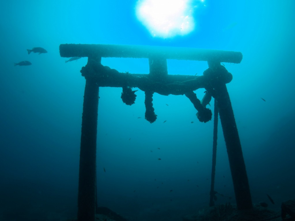 10/26海況 青い海が続いています!ニシキフウライウオ、モンハナシャコ、シテンヤッコ成魚など