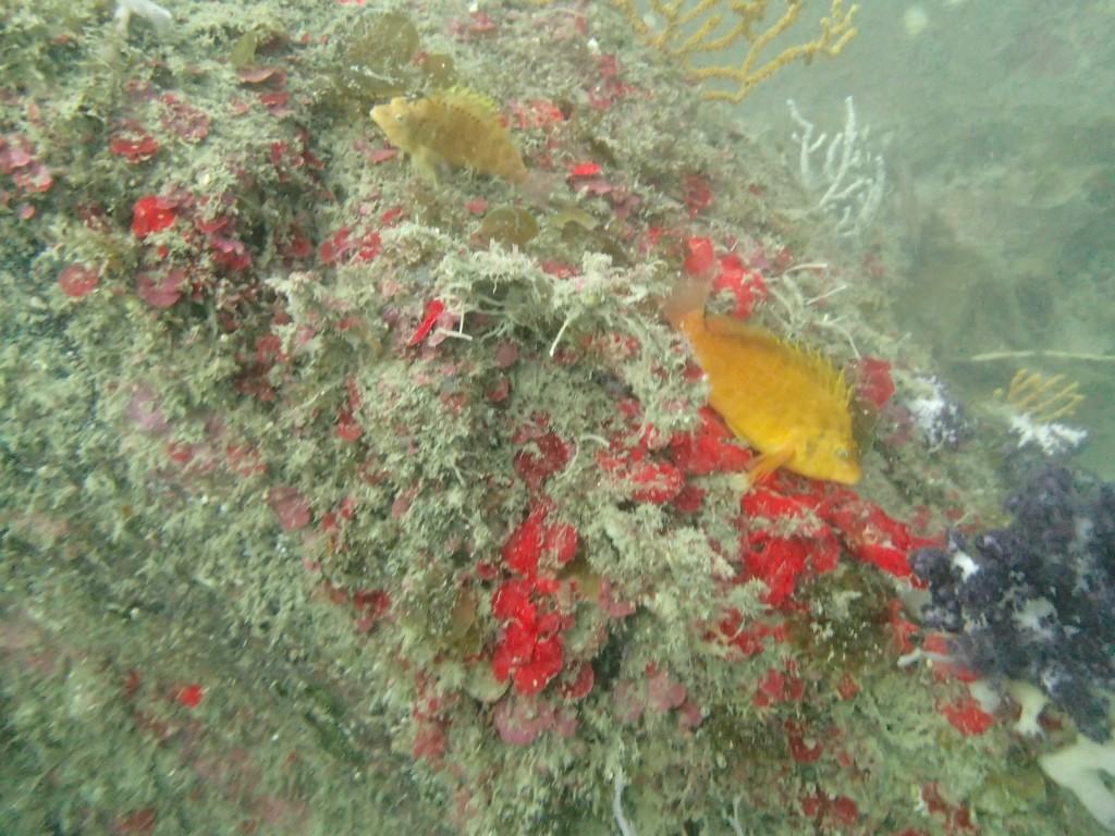 千葉県館山市の沖ノ島ビーチで藻場再生プロジェクト