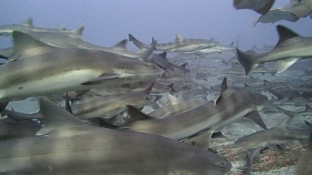 11月12日 興奮サメやらず!