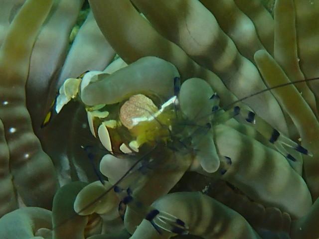 千葉県館山市の沖ノ島ビーチの魚たち