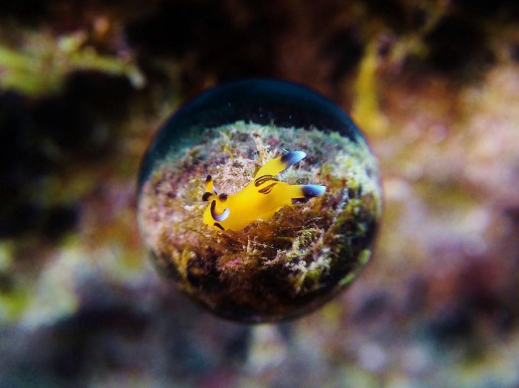 ピカチュウ、フリソデエビ、ウミウシカクレエビ、ニシキフウライウオなどにぎやかな海です!