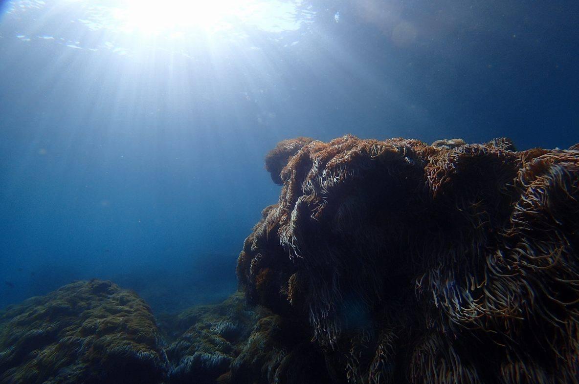 2017年1月18日(水)海洋状況