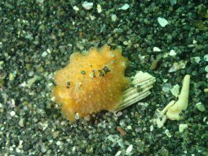 千葉県館山市の沖ノ島ビーチでダイビング|体験ダイビングなら沖ノ島ダイビングサービスマリンスノー