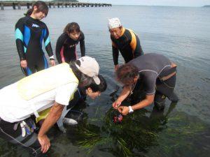千葉県館山市でアマモの種取りイベント開催|体験ダイビングなら沖ノ島ダイビングサービスマリンスノー