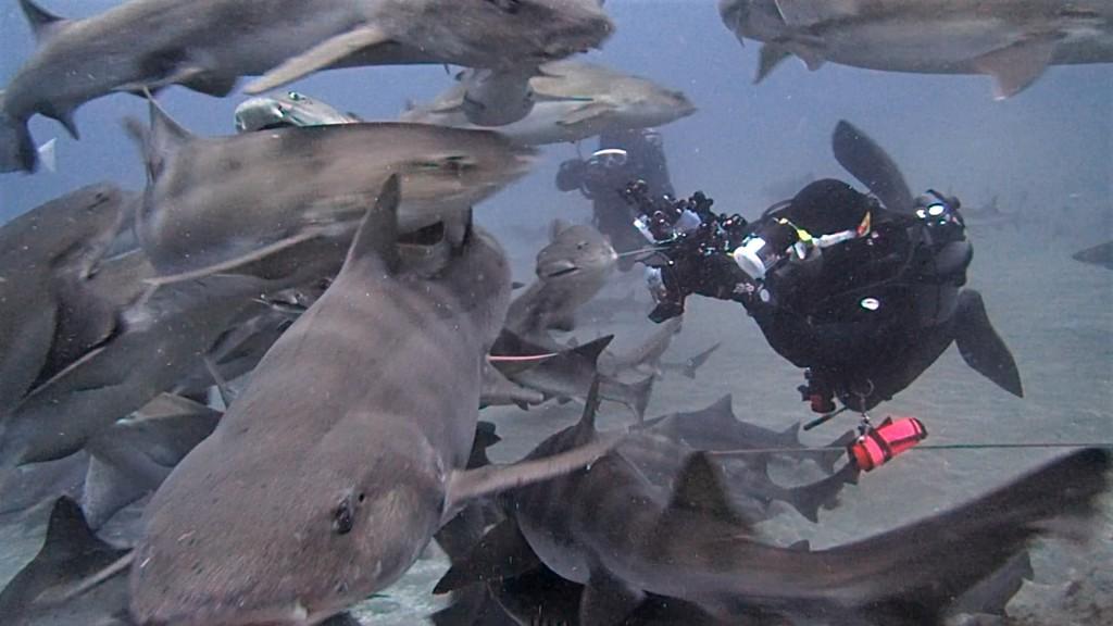 4月27日 春のドチザメ祭り in 伊戸!