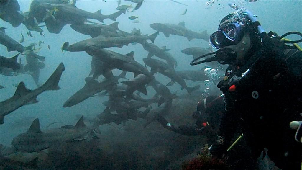 本日もサメ!サメ!!サメ!!!