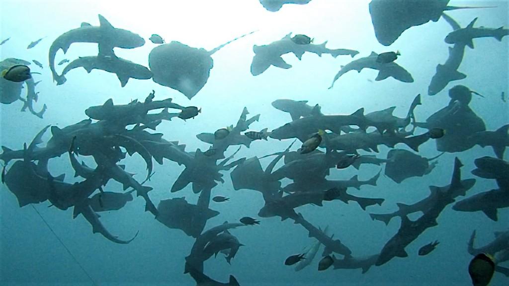 10月24日 魚!増し増しな海でした♪