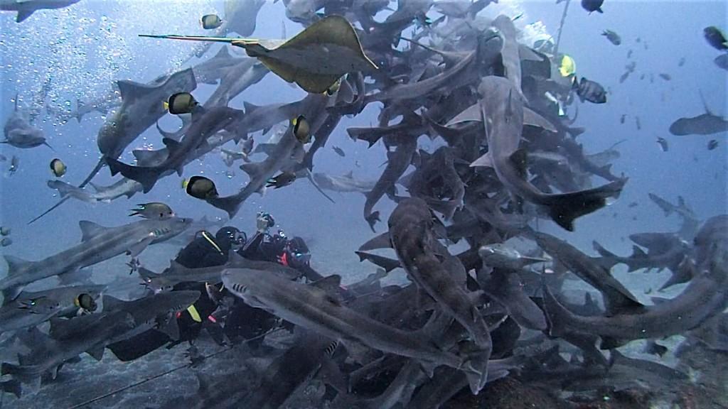 11月5日 魚も透視度もバッチリです!!