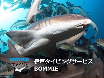 伊戸ダイビングサービス BOMMEE