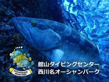 館山ダイビングセンター 西川名オーシャンパーク